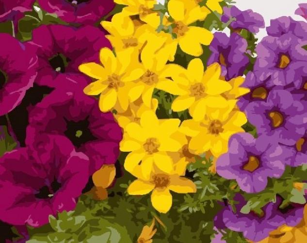 Картины по номерам Разноцветная клумба