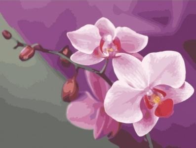 Картины по номерам Розовые орхидеи