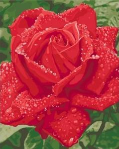 Картины по номерам Нежность розы