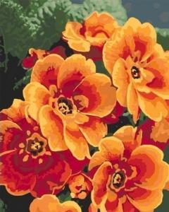 Картины по номерам Примула оранжевая