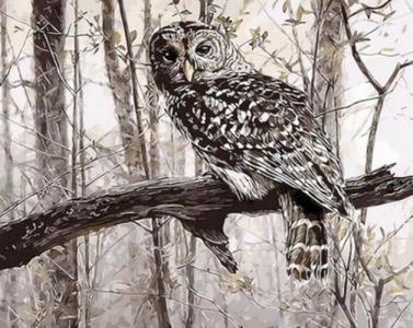 Картины по номерам Сова в зимнем лесу