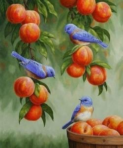 Картины по номерам Дрозди и персики