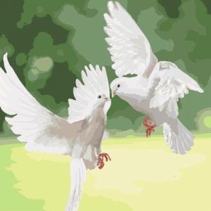 Картины по номерам Белоснежные голуби