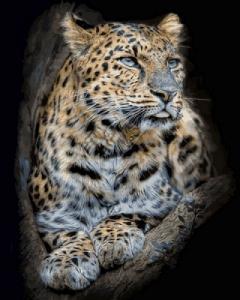 Картины по номерам Гордый леопард