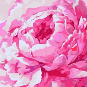 Картины по номерам Розовый пион 2