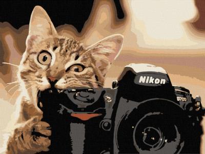 Картины по номерам Пушистый фотограф