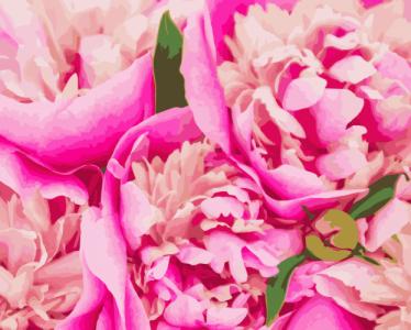 Картины по номерам Розовая Mary