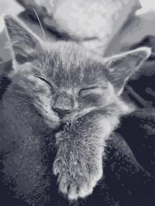 Картины по номерам Кошачья благодарность