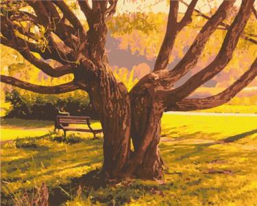Картины по номерам Старейшина парка