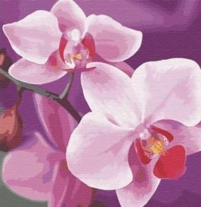 Картины по номерам Волшебная орхидея