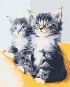 Картины по номерам Голубоглазые котята