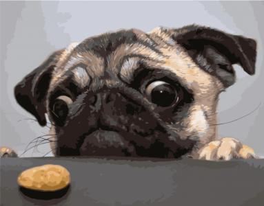 Картины по номерам Мопс та печиво