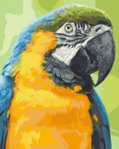 Картины по номерам Попугай Ара