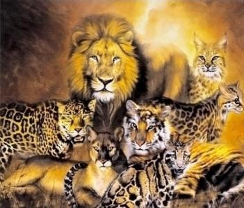 Картины по номерам Дикие кошки Африки