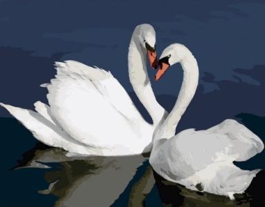 Картины по номерам Лебеди в воде