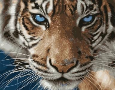 Картины по номерам Тигр голубоглазый