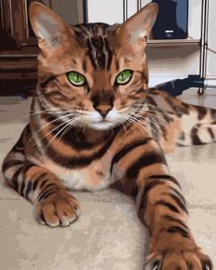 Картины по номерам Зеленоглазый полосатый кот