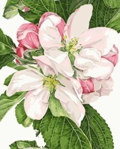 Картины по номерам Яблочный цвет