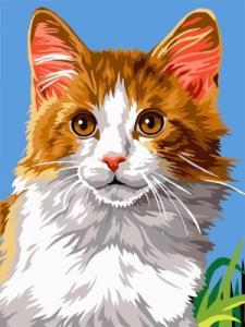 Картины по номерам Домашний кот