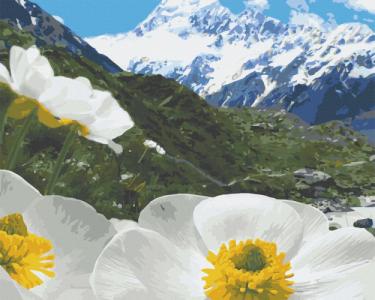 Картины по номерам Альпийские маки