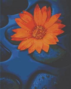 Картины по номерам Цветок лотоса