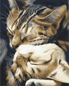 Картины по номерам Спящие котики