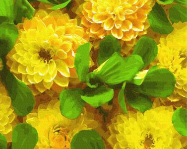 Картины по номерам Желтые георгины