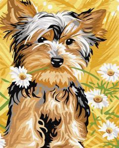 Картины по номерам Милая собачка