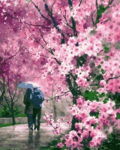 Картины по номерам Сакура под дождем