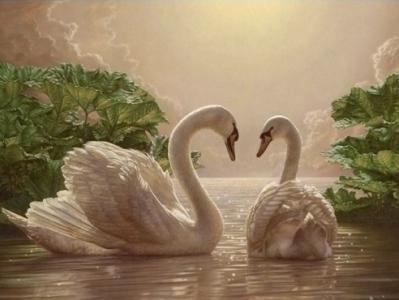Картины по номерам Пара лебедей