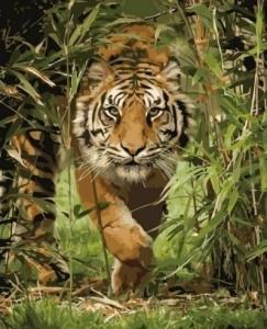 Картины по номерам Король джунглей