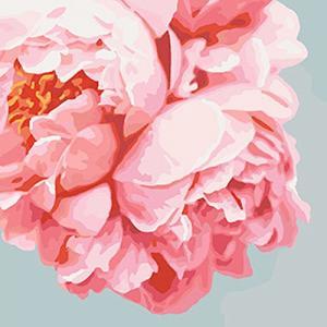 Картины по номерам Розовые пионы