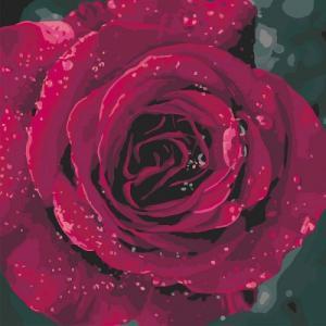 Картины по номерам Роза