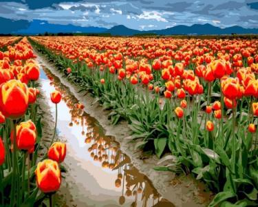Картины по номерам Море тюльпанов