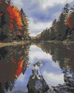 Картины по номерам Собачка у озера