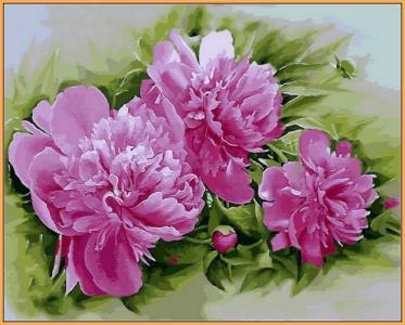 Картины по номерам Розовые пионы (в раме)