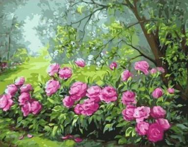 Картины по номерам Красочные кусты пионов