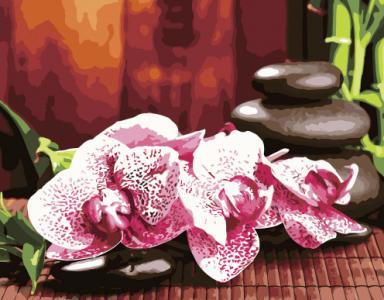 Картины по номерам Яркие орхидеи