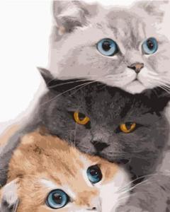 Картины по номерам Три котика