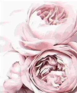 Картины по номерам Нежные розовые пионы 2