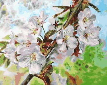 Картины по номерам Цвет вишни