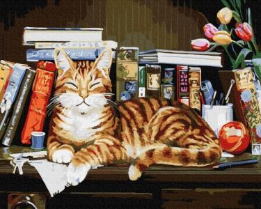 Картины по номерам Кот на книжной полке