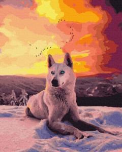 Картины по номерам Арктический волк
