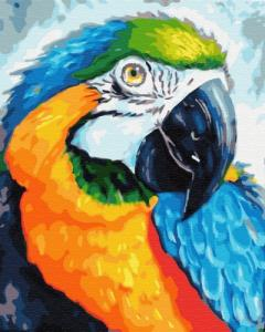 Картины по номерам Красочный попугай