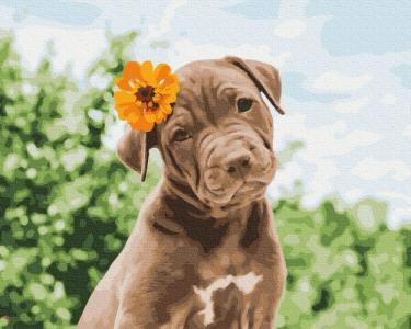 Картины по номерам Собачка милый романтик